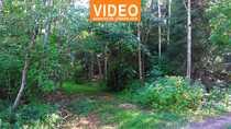 Auszeit nehmen - Freizeitgrundstück mit Waldbestand