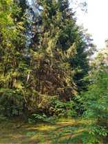 Waldgrundstück waldgrundstueck immobilien günstig mieten oder kaufen quoka de