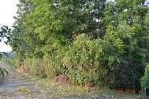 Gartengrundstück zu Verkaufen ca 1038