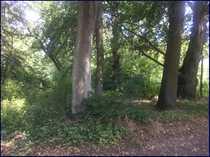Grundstück mitten im Klosterwiesengraben