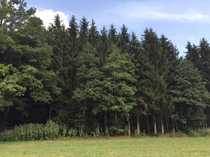Top gepflegtes Waldgrundstück Schlagreifer Fichtenbestand