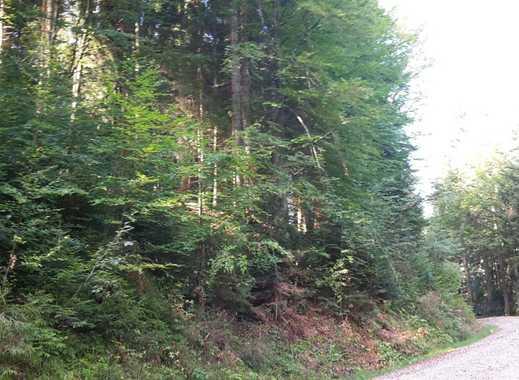 Bergwald (Mischwald) zwischen Marienstein-Gaißach, Obj-Nr. T/0342-3