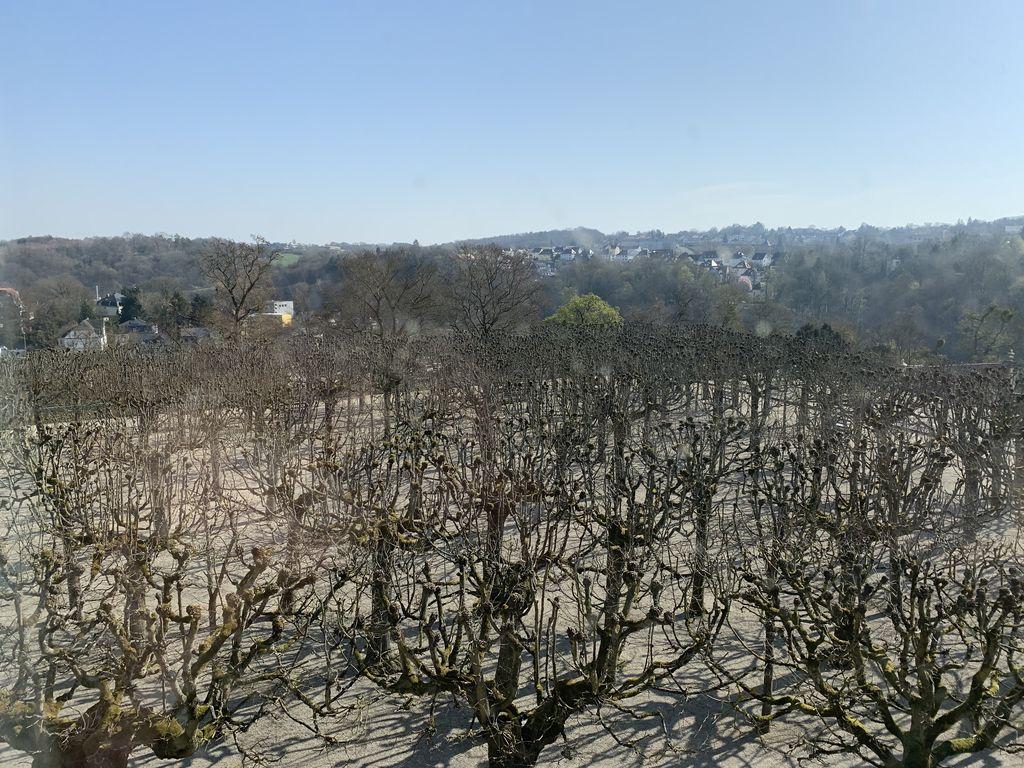 Blick in den Schlossgarten