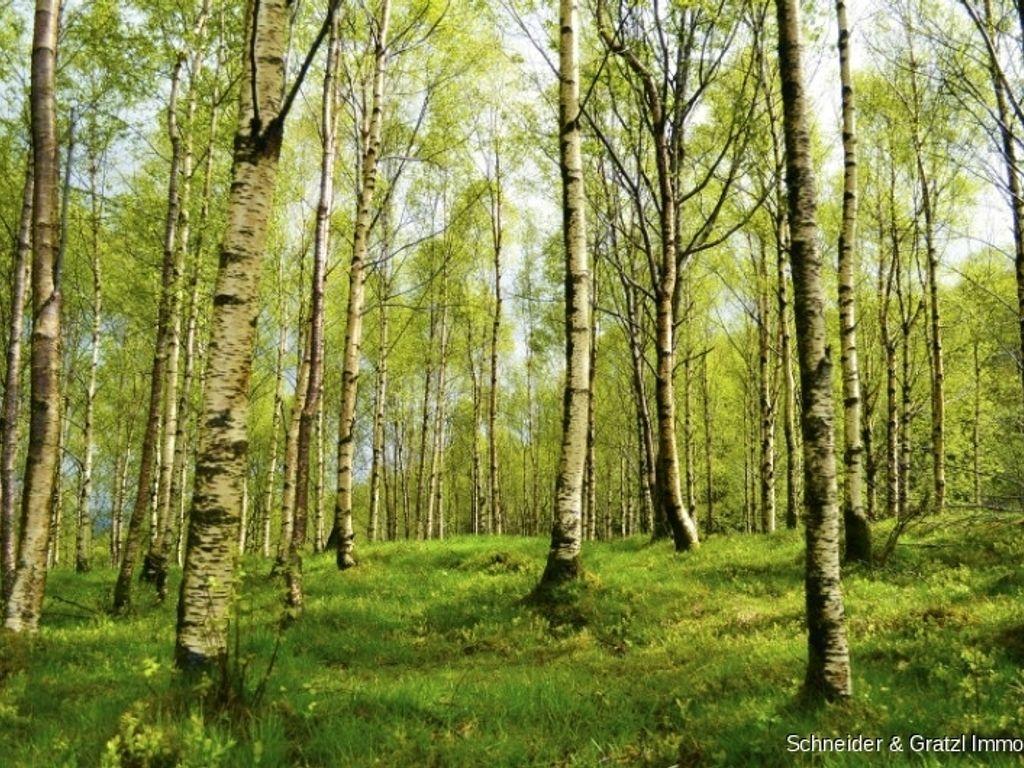 Waldgrundstück gut erschlossenes waldgrundstück mit schlagbarem bestand