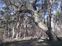 Waldnahes Grundstück sucht naturverbundene n