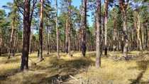 Schöner Wald zu verkaufen zusammenhängend