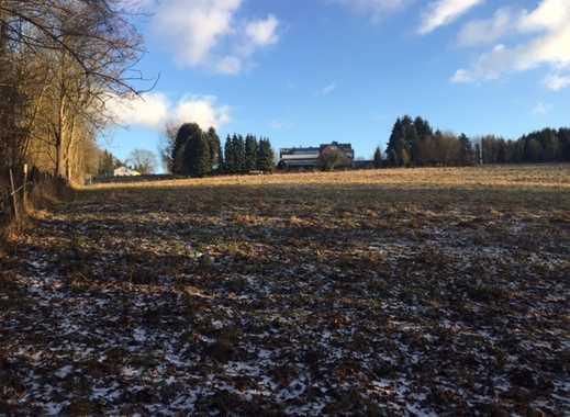 Grünland/ Wald/ Weide/ Wiese/ Hobbyland/ Pferdeweide