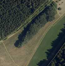 Wald Biotop mit Wiese in
