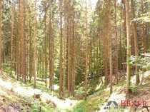 3 4 ha Wald zwischen