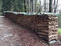 1 5 ha Laubwald Buche
