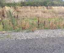 Baugrundstück im Birkengewann