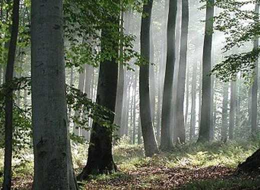 Großbesitz nur 1,50EUR/qm: Wald- und Wiesenfläche 2,4 Hektar