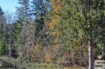 Zwei Waldgrundstücke nähe Hausham ca