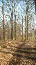 Idyllische Waldflächen im Stadtgebiet Ascheberg-Herbern