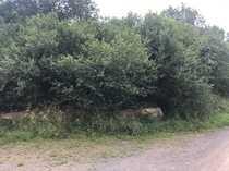 Grundstücke Grünland zur eventuellen Bebauung