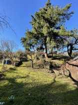 Wunderschönes Gartengrundstück in Waldrandlage - Licht