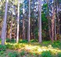 Bild **Interessantes Waldgrundstück**