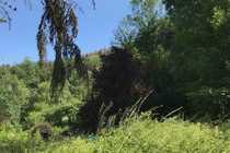 Waldflächen Mischwald Streuobstwiesen etc rund