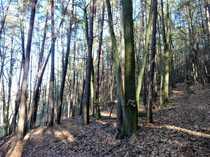 Bild GANESHA-IMMOBILIEN...wunderschöner Mischwald sehr Ortsnah und gut erreichbar zu verkaufen !