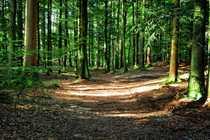 Wald Gute Kapitalanlage