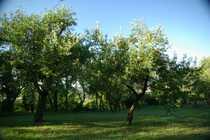 Schönes großes Gartengrundstück
