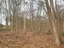Waldflächen in der Ville