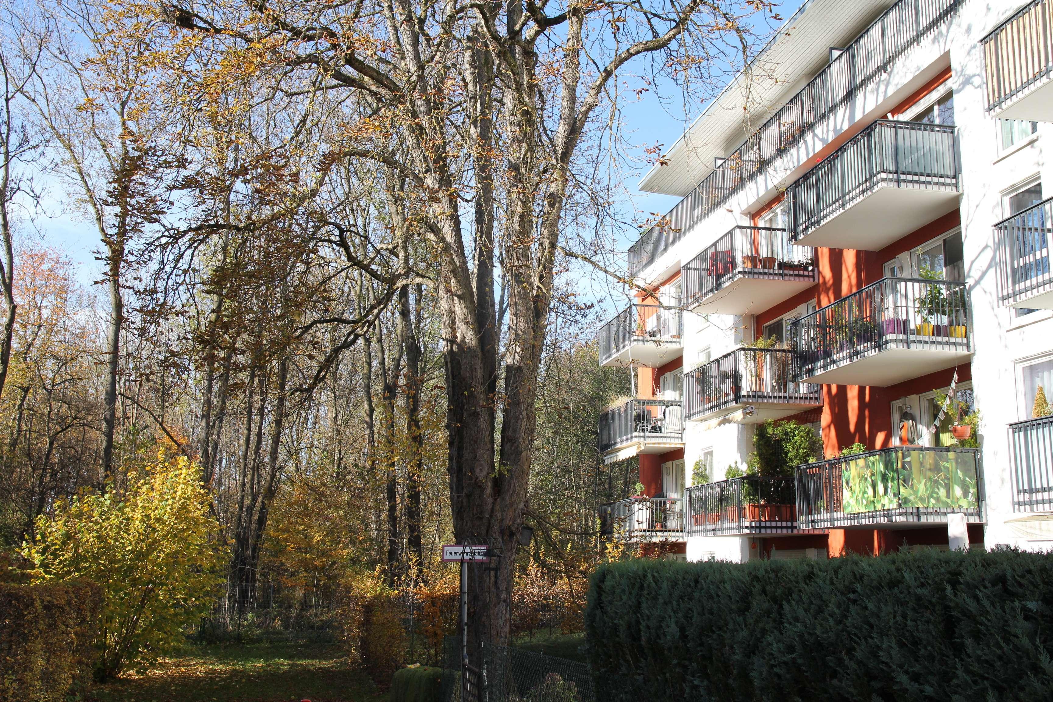 3,5 Zimmer in den Wipfeln des Pasinger Stadtparks