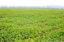 Bild Ackerflächen mit hervorragender Bodengüte im Burgenlandkreis
