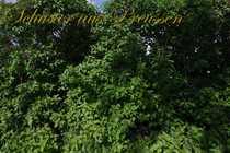 Schuster aus Preussen - Karow - Baugrundstück