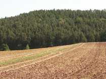 Bild Nutzwald mit über 70 Jahre alten Baumbestand 9450 m² OT Obernzenn