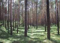 Wald - Landkreis Mühldorf - ab 1