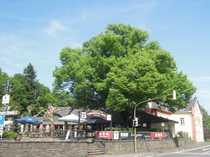 Tradition - Restaurant am Margarethenkreuz mit