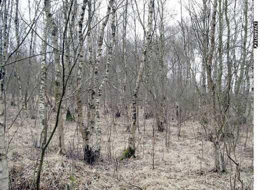 Großes 45.000m² Grundstück mit Birkenwald in Vollersode