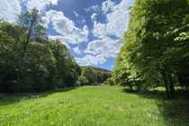Wiesengrundstück in Dillenburg