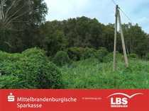 Waldfläche direkt am Rhin bei