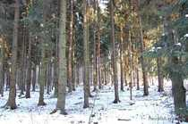Bild Kleines Waldstück nahe am Bärwalder See