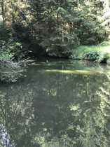 Bild Freizeitgrundstück mit 4 Fischteiche in schönem Waldgrundstück gelegen !
