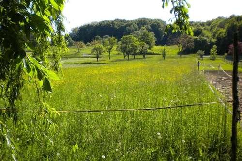provisionsfreier Grundstücks-Traum bei den Kellerstöckeln des Südburgenlandes