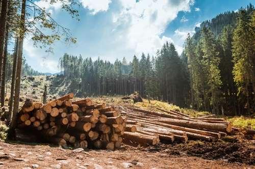 Waldgrundstück mit kleiner Jagdhütte