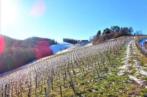 Weingarten in südsteirischer Bestlage
