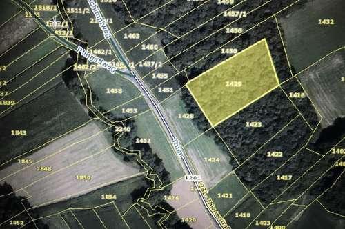 Waldfläche mit 5456m² nähe Gnas zu verkaufen!