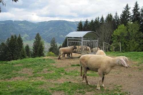 Bauernhof mit ca. 1,3 ha landwirtschaftlicher Fläche und ca. 6 ha Wald in wunderschöner Aussichtslage auf 800 m Seehöhe!