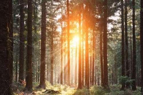 50 ha Forstbesitz nahe Klagenfurt zu verkaufen!