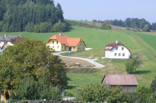 Sonniger Baugrund im Siedlungsgebiet