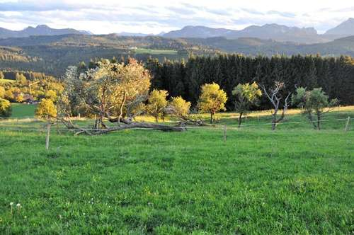 Schönes Grünland mit toller Aussicht in Feichtenberg zu verkaufen!
