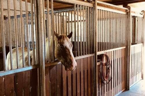 Der Traum vom Einfamilienhaus mit angeschlossenem Pferdestall und eigenem Reitplatz!
