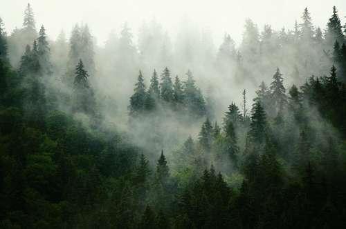 18 ha Forstbesitz zu verkaufen!
