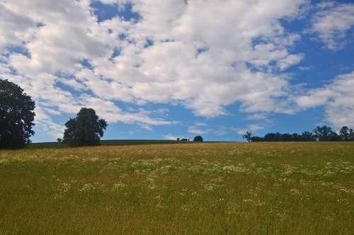 Wienerwaldwiese, Wald und Baulandfläche