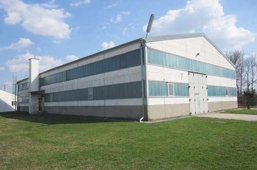 LAGERHALLE mit Büros in Enzersdorf/Fischa