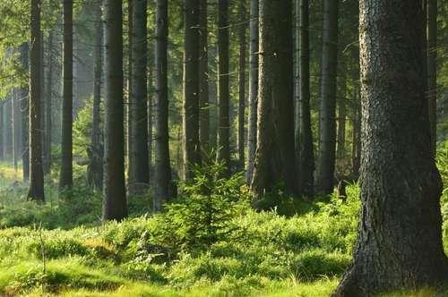 Waldgrundstück, leicht erreichbar!